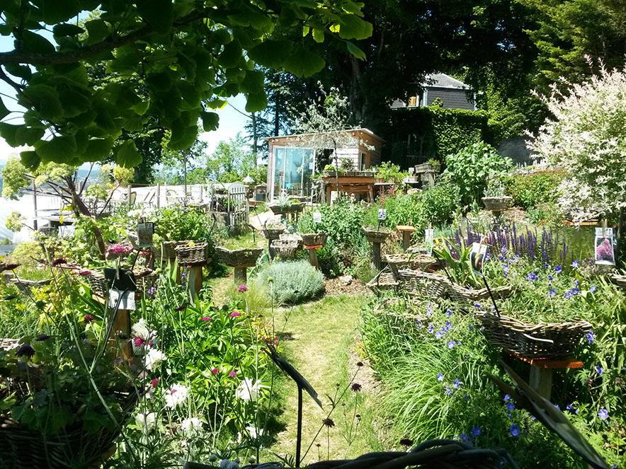 Plantes vivaces pr sent es dans un jardin l 39 anglaise for Les plantes vivaces