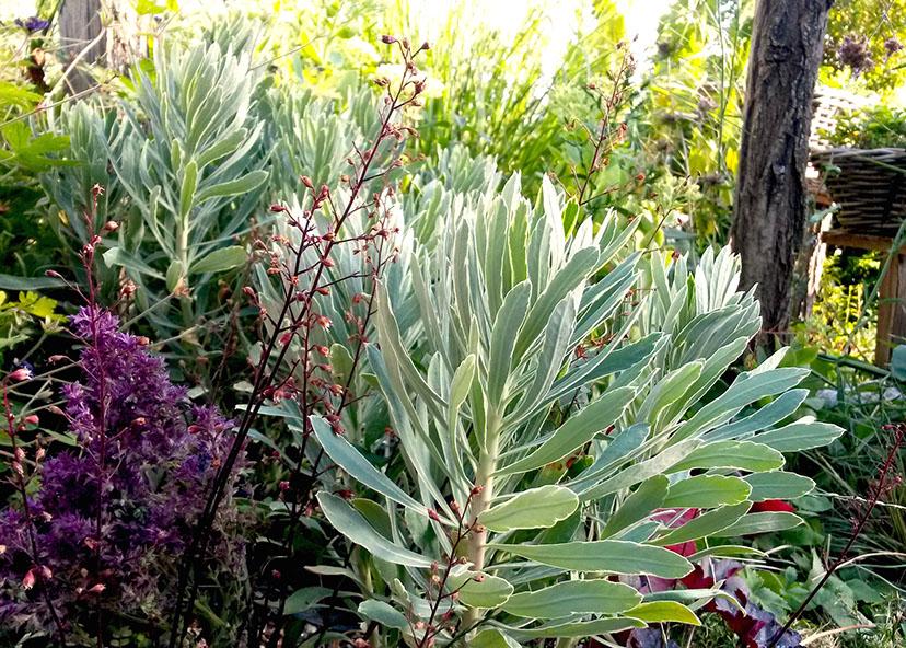 Awesome photos de plantes vivaces contemporary for Plantes vivaces rustiques